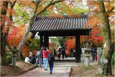 Circuit Japon Kyushu Kagoshima Voyage Japon