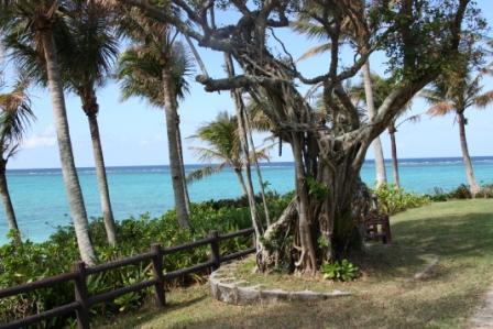 Voyage de noces Japon Okinawa arbre des amoureux