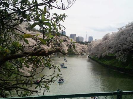 voyage-tokyo-sakura