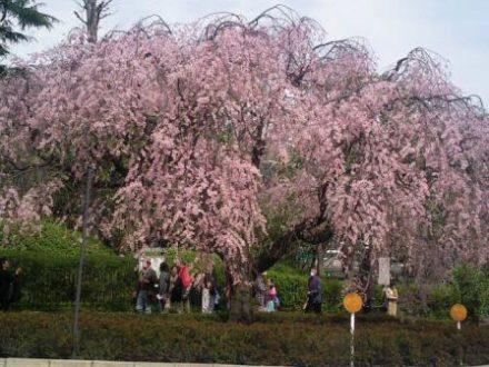 Vacances Japon Sakura Hanami Tokyo Voyages Japon