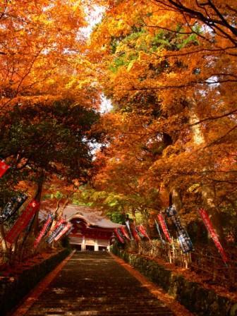 Voyage Japon Gakuen Ji Temple 紅葉1 Circuit Japon