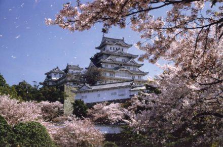 Voyage Japon circuit sakura