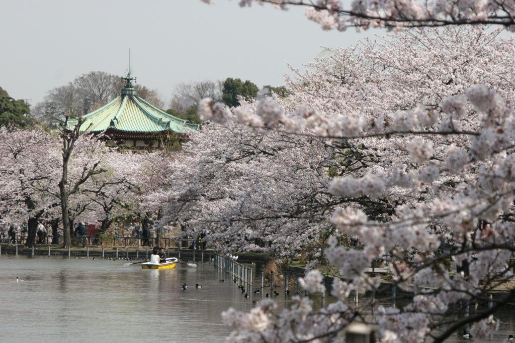 Séjour circuit Japon cerisiers en fleurs tokyo voyage vacances japon