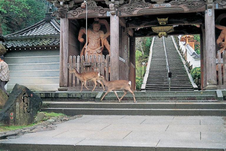 Temple-Daishoin-escalier-statue-miyajima-hiroshima-japon-séjour-circuit-voyage